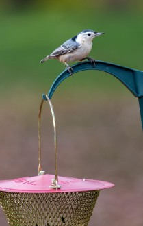 Birds-14