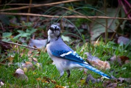 Birds-16