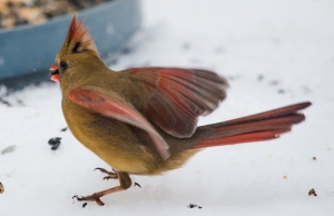 birds2-2