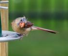 Birds6-20-2