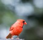Birds6-20-3