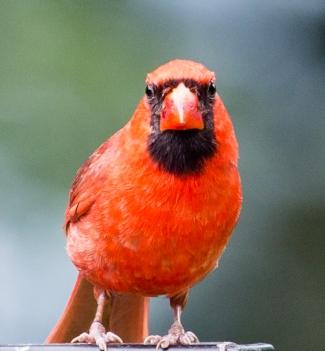 Birds6-20-4