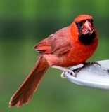 Birds6-20-5