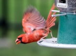Birds6-20-7