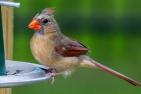 Birds6-20