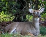 Deer0916-3