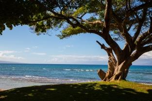 Maui landscape-3