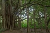 Maui landscape-38