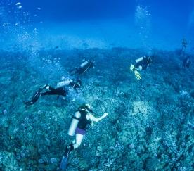 Maui scuba-10