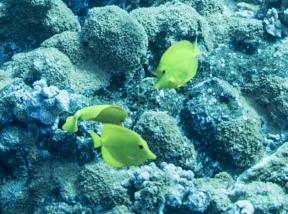 Maui scuba-11