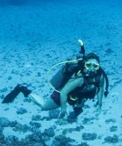 Maui scuba-12