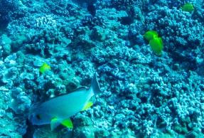 Maui scuba-13