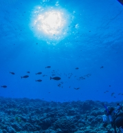 Maui scuba-14