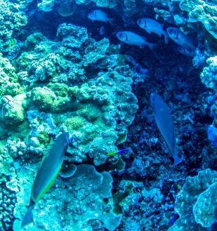 Maui scuba-15