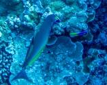 Maui scuba-16