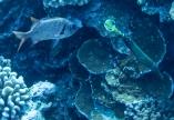 Maui scuba-18
