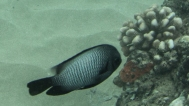 Maui scuba-2