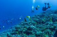Maui scuba-20