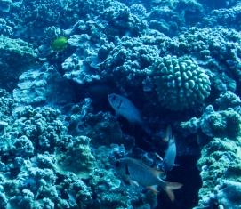 Maui scuba-21