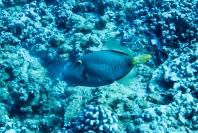 Maui scuba-22