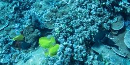 Maui scuba-23