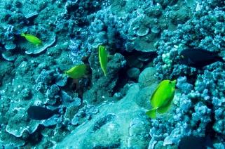 Maui scuba-24