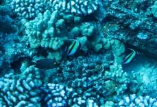 Maui scuba-27