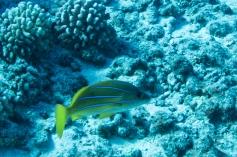 Maui scuba-28