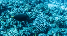 Maui scuba-29
