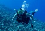 Maui scuba-33