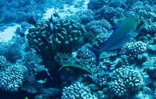 Maui scuba-35