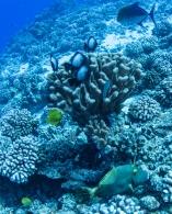 Maui scuba-36