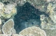 Maui scuba-4