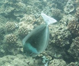 Maui scuba-5
