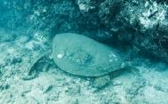 Maui scuba-6
