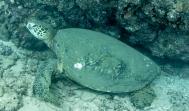 Maui scuba-7