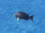 Maui scuba-8