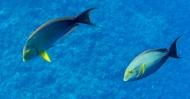 Maui scuba-9