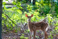 FathersDay2016Fawns-2