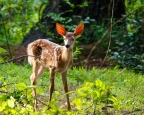 FathersDay2016Fawns-3